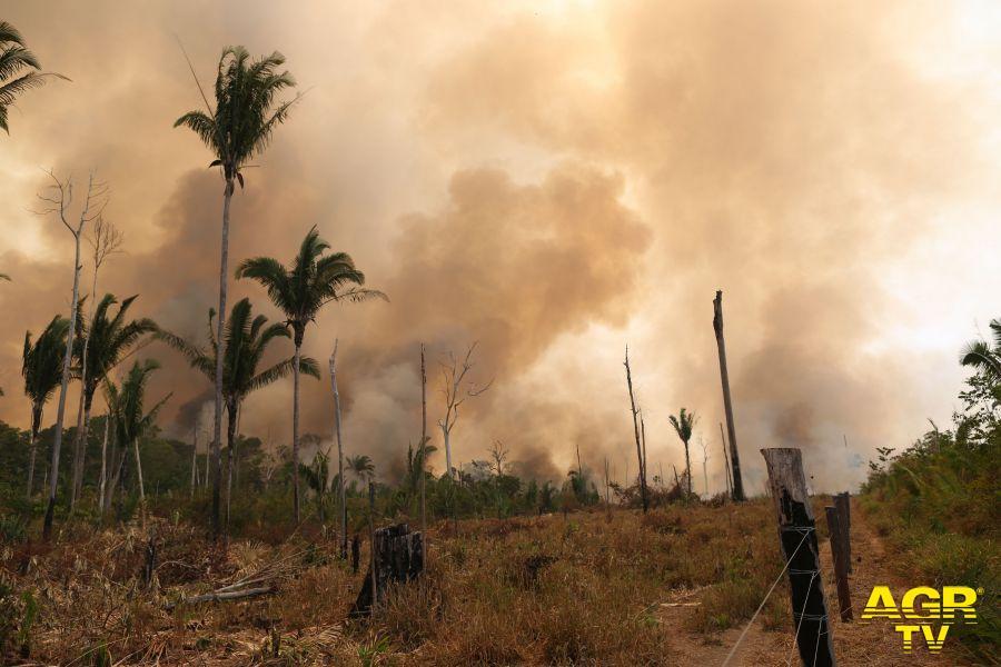 incendio Amazzonia WWF