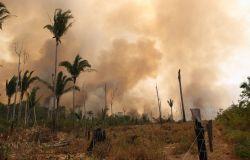 WWF, le popolazioni di animali selvatici ridotte dei 2/3
