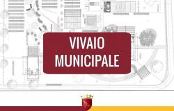 progetto vivaio X Municipio
