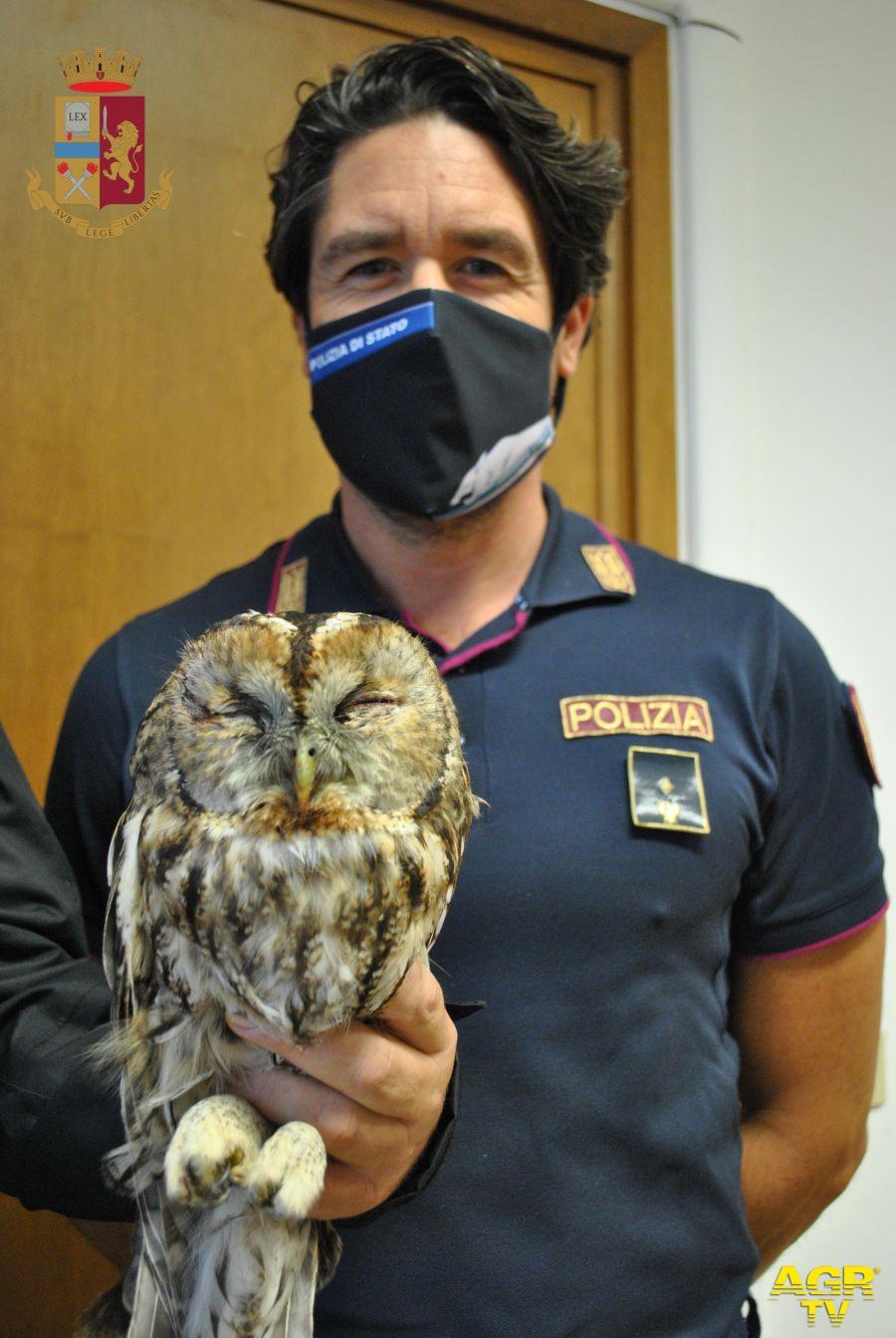 il falco ferito ed il suo salvatore
