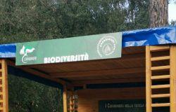 castelfusano carabinieri forestali punto raccolta