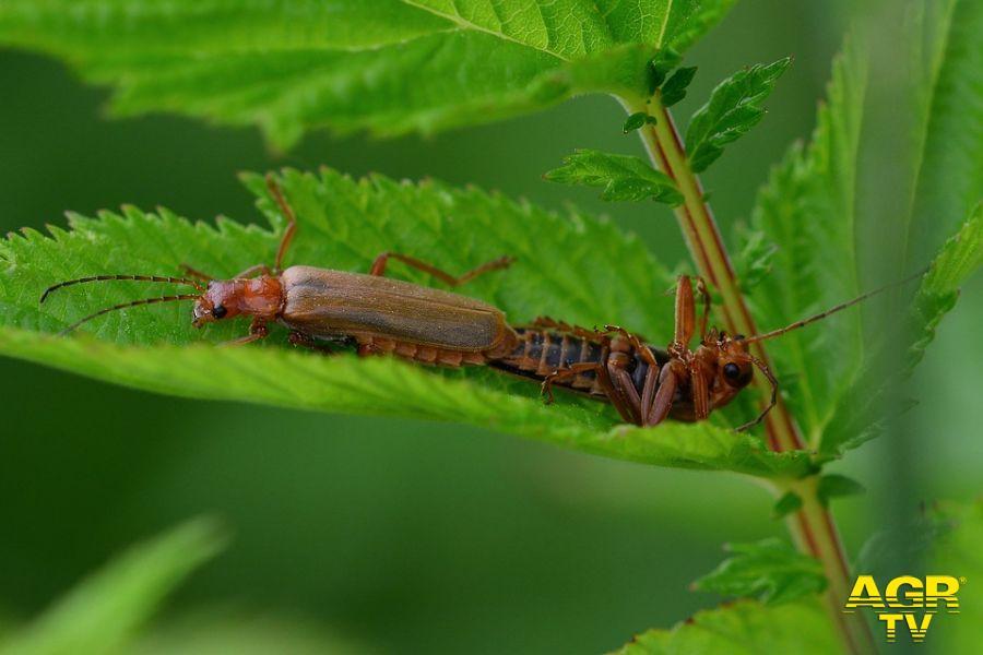 CHM Ostia, non avveleno insetti e blatte, non mi ...avveleno