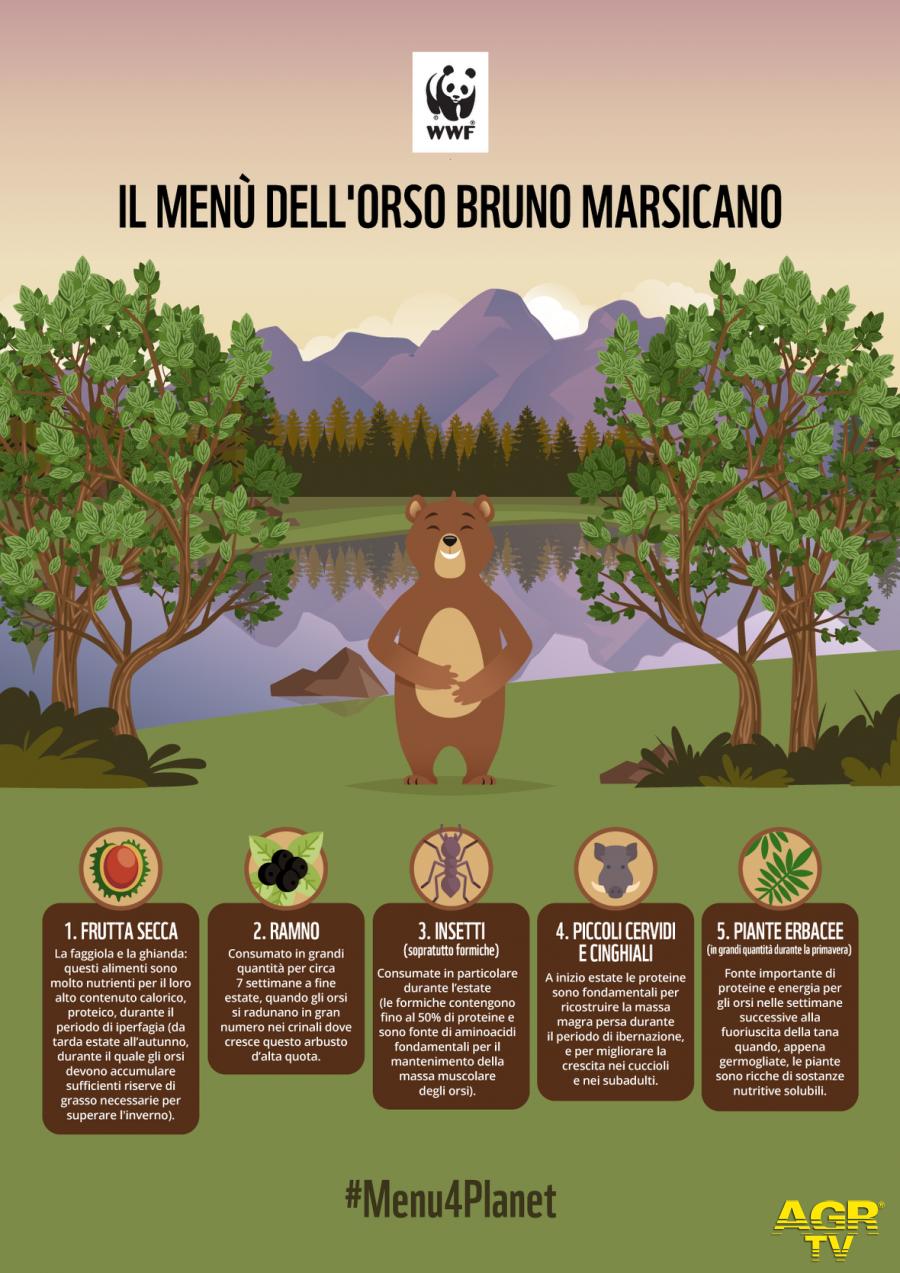 WWF, uomini ed orsi, una convivenza che inizia dal menu