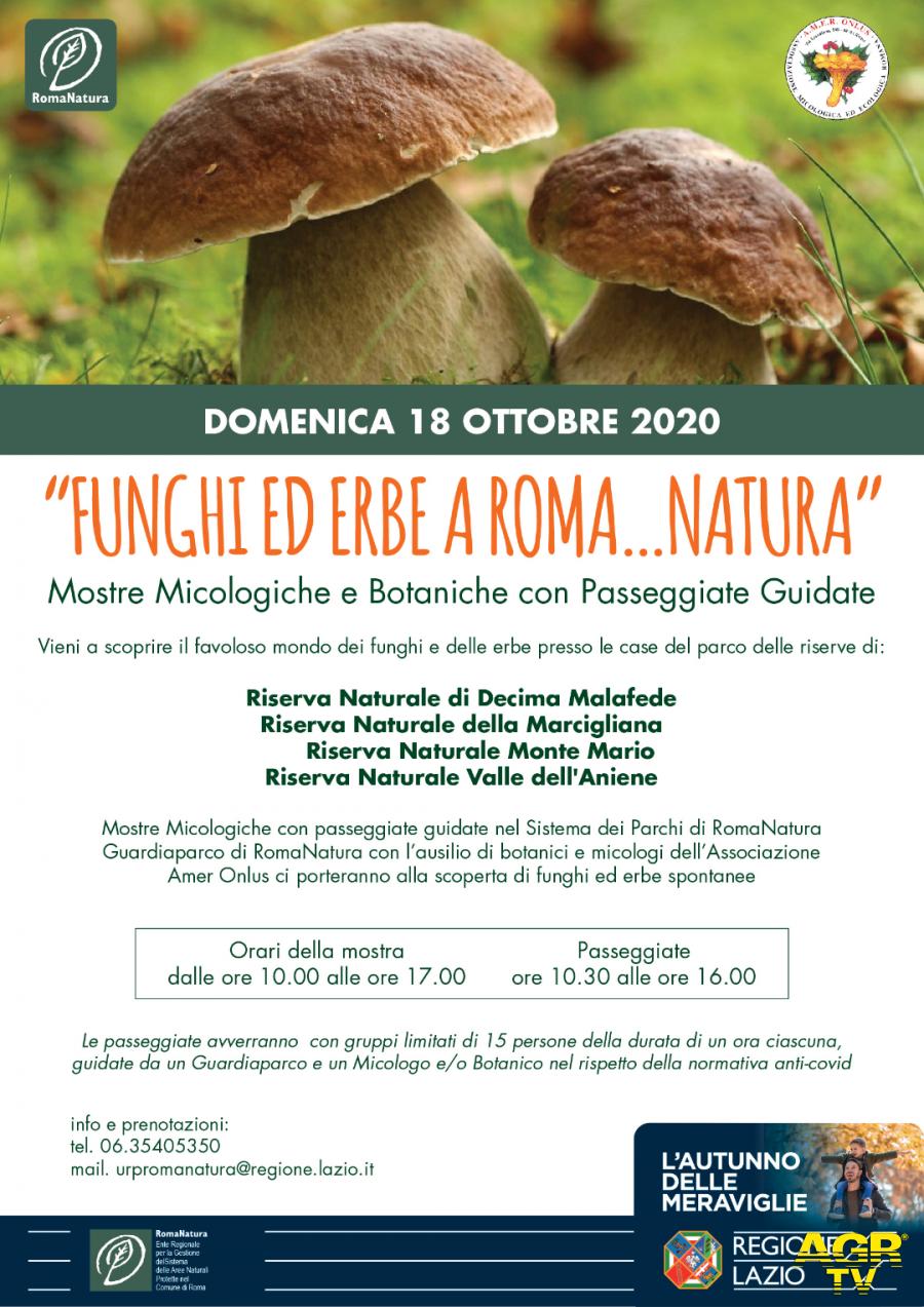 Alla scoperta di funghi ed erbe a Roma Natura