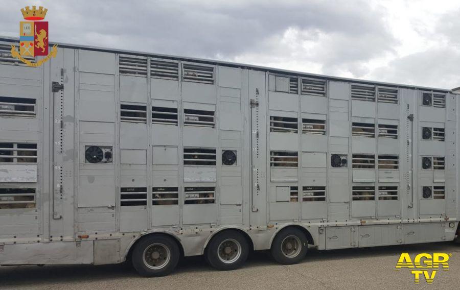 Mezzo trasporto animali