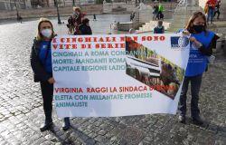 L'OIPA presenta un esposto in Procura per l'uccisione dei cinghiali a Roma