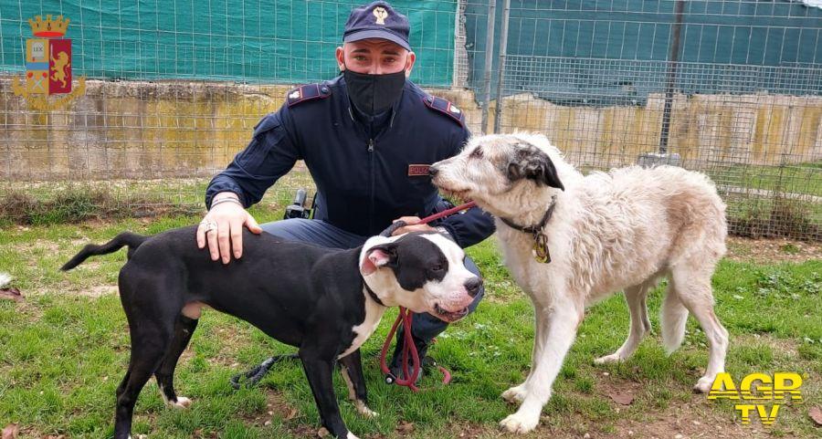 Picchia selvaggiamente i suoi cani, la polizia la denuncia e gli toglie gli animali