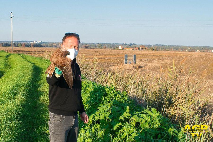 Maccarese, 6 anni dopo l'inquinamento dei canali con il cherosene, la Lipu Ostia libera un gheppio
