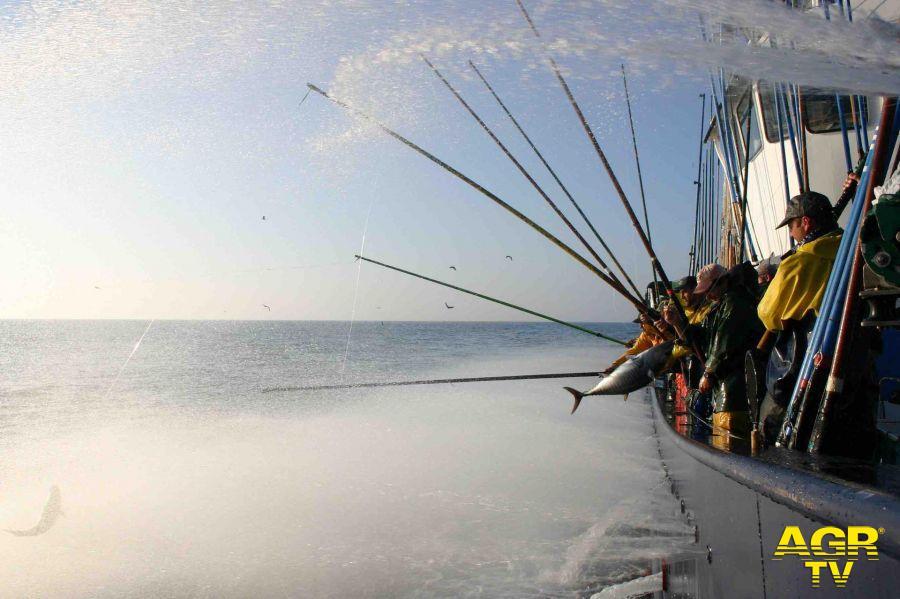Mangiare pesce, l'identikit del consumatore consapevole e responsabile, prodotti ittici i preferiti dagli italiani