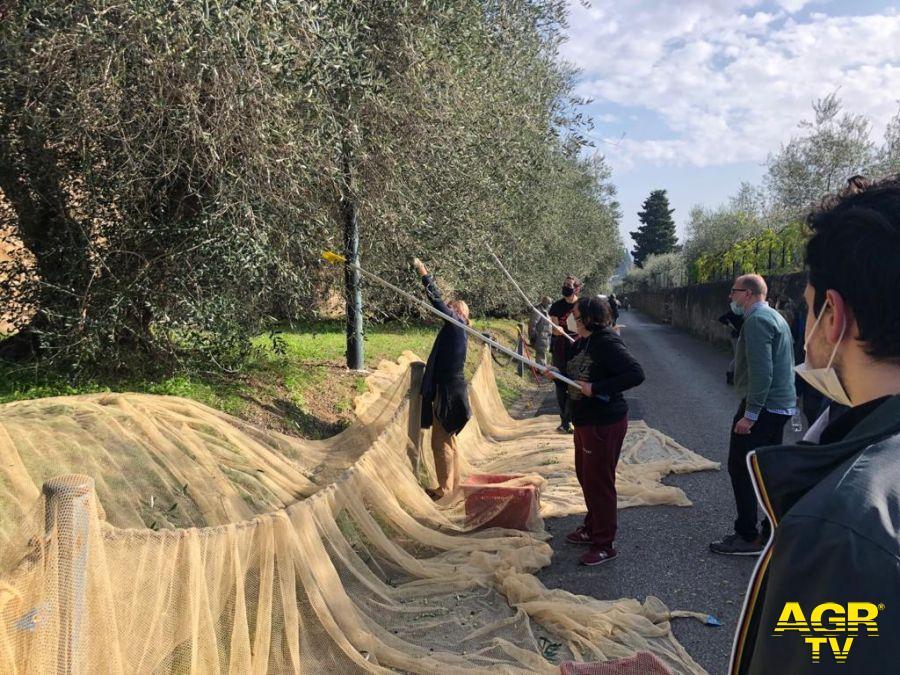 ragazzi dei Centri diurni riabilitativi a raccogliere olive al Forte Belvedere