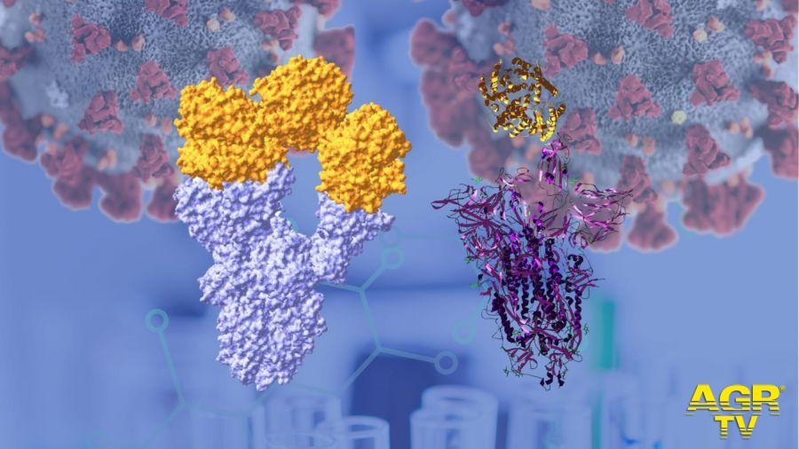 Università dell'Insubria, il suo laboratorio produce la proteina Spike, fondamentale per tutte le ricerche sui vaccini