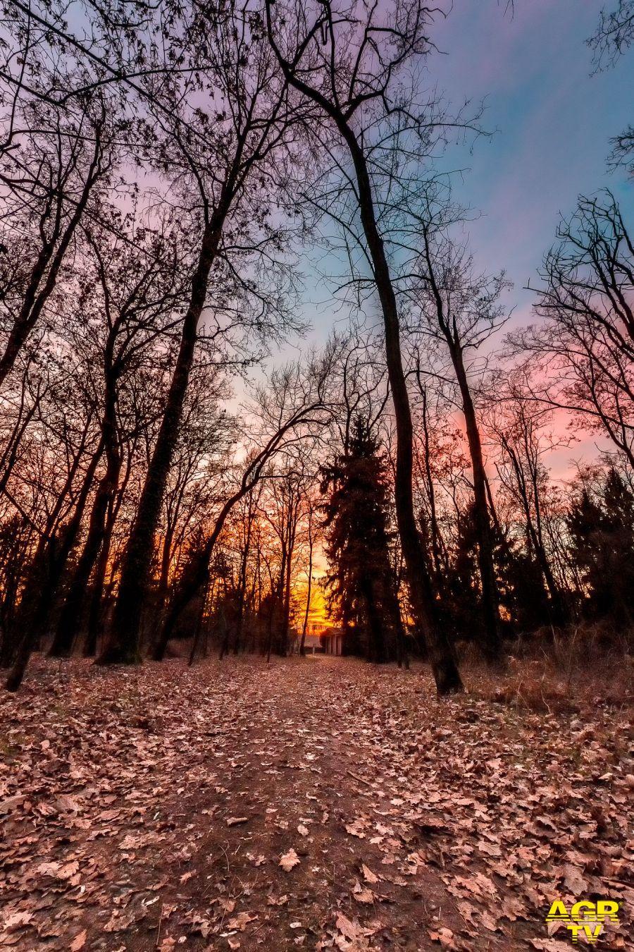 Sabato 21 novembre, Giornata nazionale degli alberi