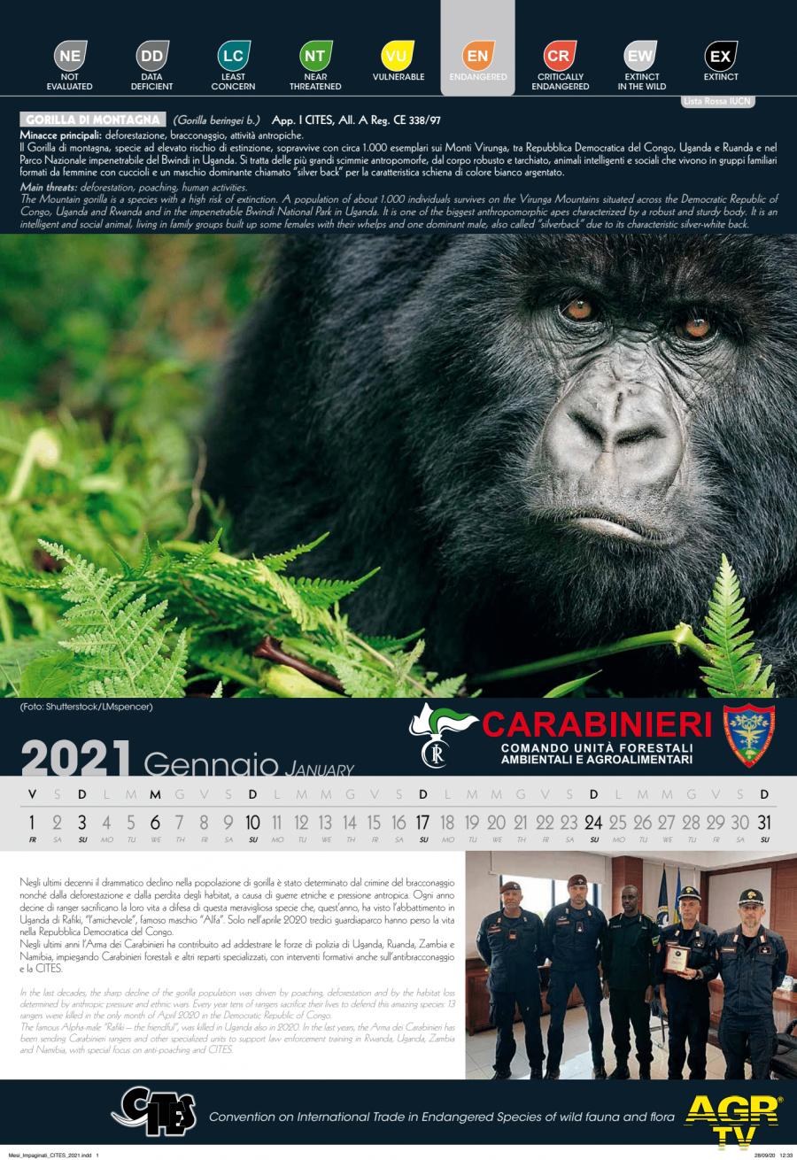 Carabinieri Cities, il calendario 2021 racconta il loro impegno a difesa e protezione degli animali