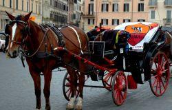 Roma, le botticelle nei parchi, l'Oipa: i cavalli che andranno in pensione siano tutelati