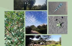 #naturapomezia... le bellezze del territorio viste dai vostri occhi