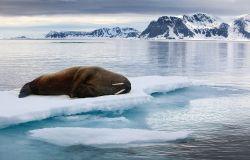WWF, al via la campagna Cari Umani, obiettivo: carbonio uguale a zero