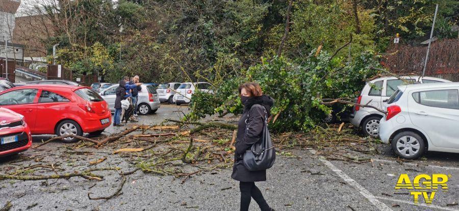 Mostacciano, ancora un albero caduto nel quartiere