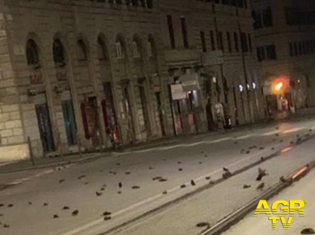 Roma, strage di uccelli per i fuochi d'artificio