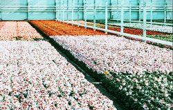 Agricoltura, oltre 9,5 milioni per promozione all'estero, trasformazione prodotti e florovivaismo