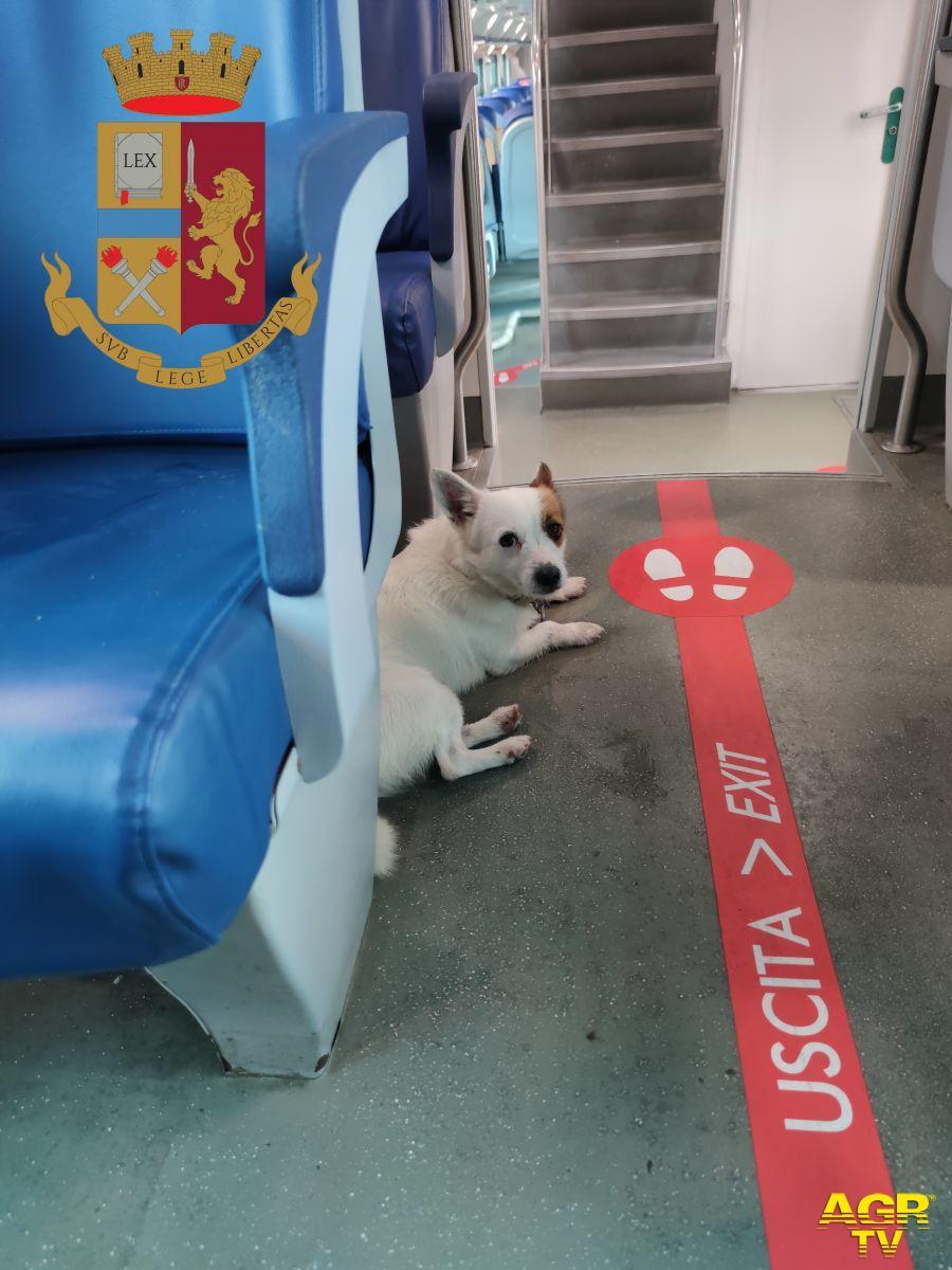 Spaventato dai botti di fine anno un cane si rifugia su un treno, dalla Lav: stop ai fuochi artificiali tutto l'anno