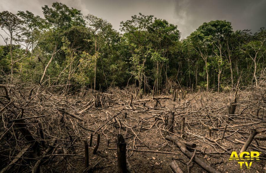 deforestazione foto luis barreto wwf