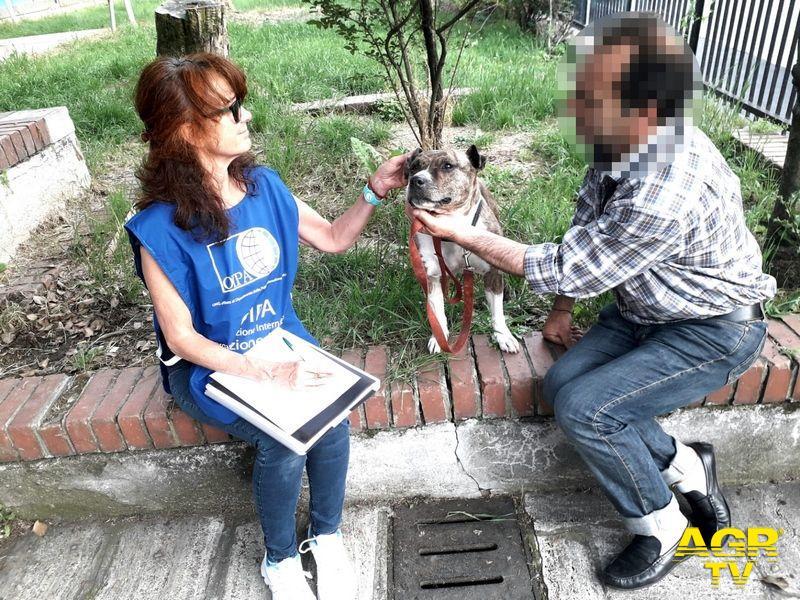 Protezione animali, aprite le case di accoglienza anche ai clochard con i cani