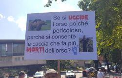 Orsi, la Provincia Autonoma di Trento annuncia possibili abbattimenti tra i plantigradi