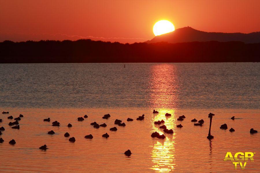 oasi Orbetello (foto Marcone WWF)