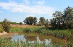 oasi Macchiagrande (foto Marcone WWF)