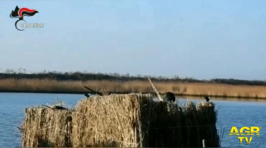 Operazione Delta del Po, controlli antibracconaggio