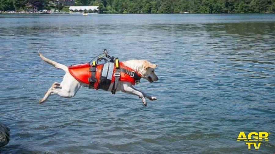 una scuola di formazione per abilitare unità cinofile per il salvataggio in mare
