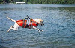 Sport, la proposta: una scuola di formazione per abilitare unità cinofile per il salvataggio in mare