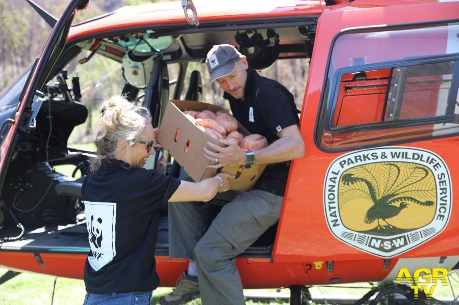 WWF volontari impegnati parchi