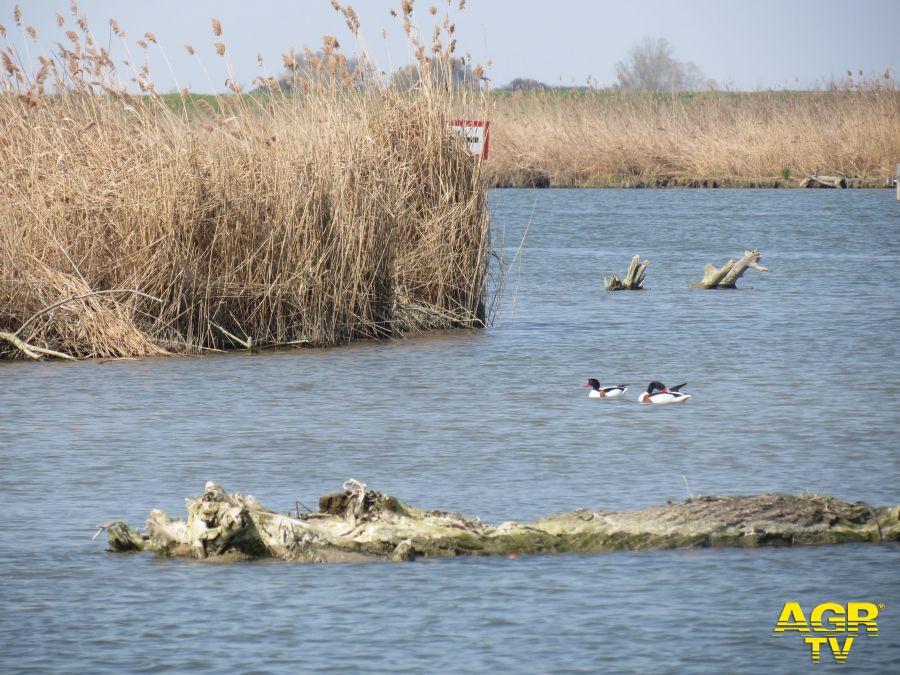 Delta del Po foto WWF Biancatelli