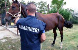 Bracciano, furti di cavalli i carabinieri ritrovano sei esemplari
