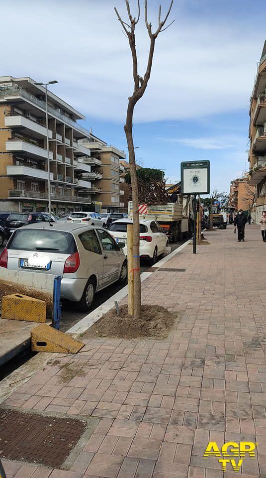 Verde pubblico, strumento per il rilancio e la valorizzazione di Ostia