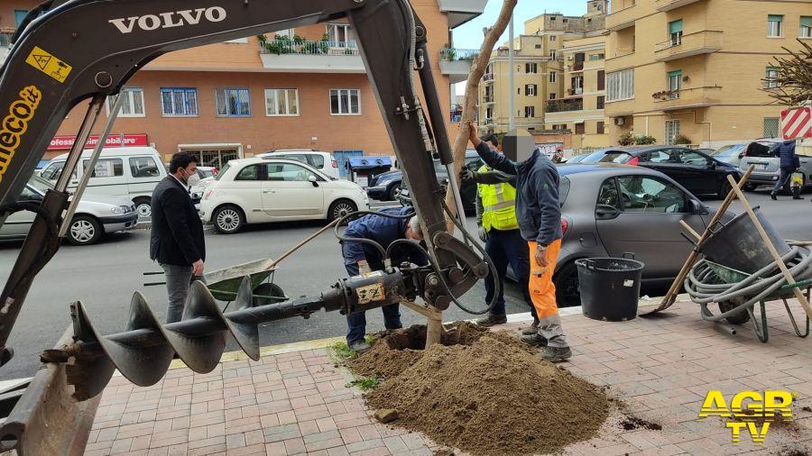 Ostia, nuovi alberi in Viale Paolo Orlando