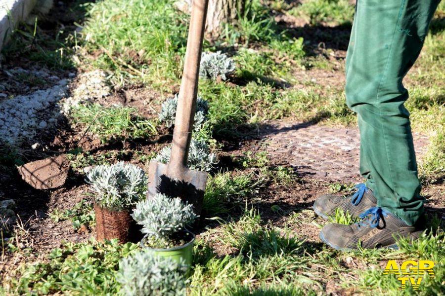 Giornata mondiale di azione per il clima, al via le piantumazioni nell'area verde del Pineto