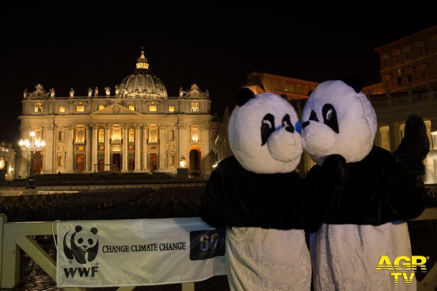 I panda a San Pietro