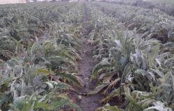 Agricoltura, avviata procedura per accedere a interventi compensativi per danni da gelate