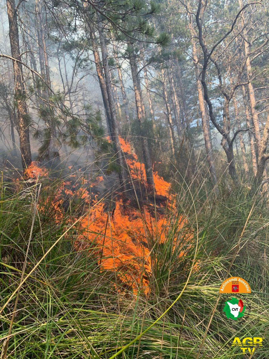 Incendio boschivo a Seggiano (Gr).