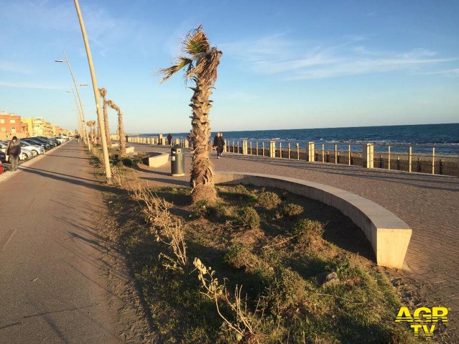 FdI: le aiuole del lungomare di Ostia ponente non sono mai verdi