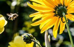 WWF, difendere le api per proteggere la biodiversità, via alla campagna ReNature