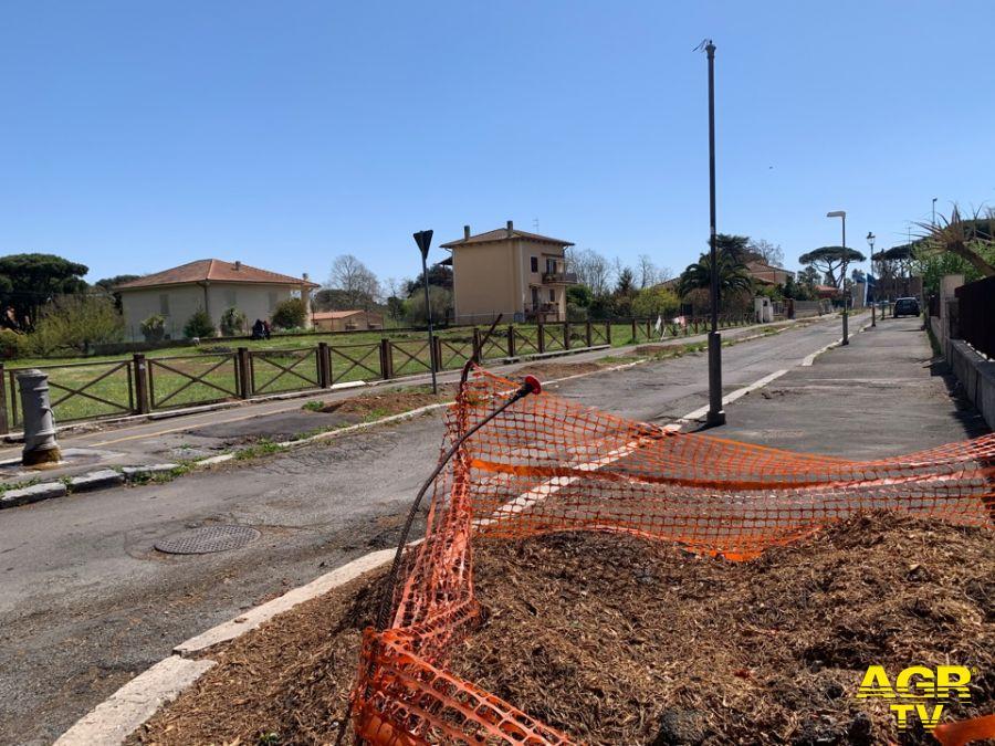 Ostia antica via della stazione pini abbattuti