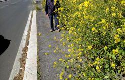 Acilia, una passeggiata tra i fiori su via Prato Cornelio