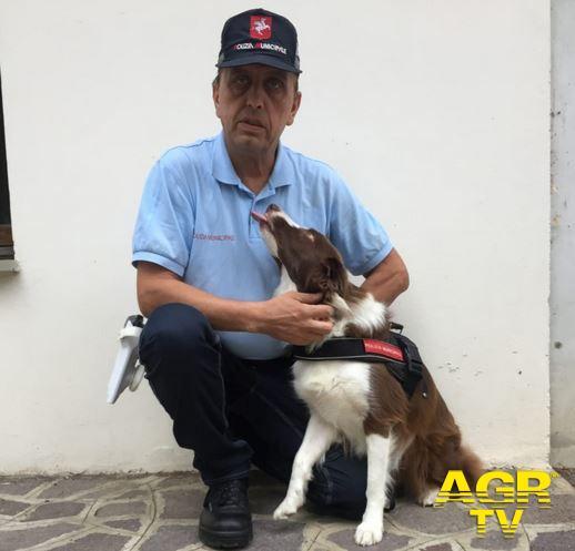 Redazione di Met Morta Piper, eroe antidroga a quattro zampe della Polizia Municipale di Firenze