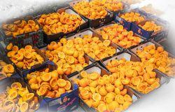 La Food Policy arriva in Consiglio comunale, presentata la proposta di delibera