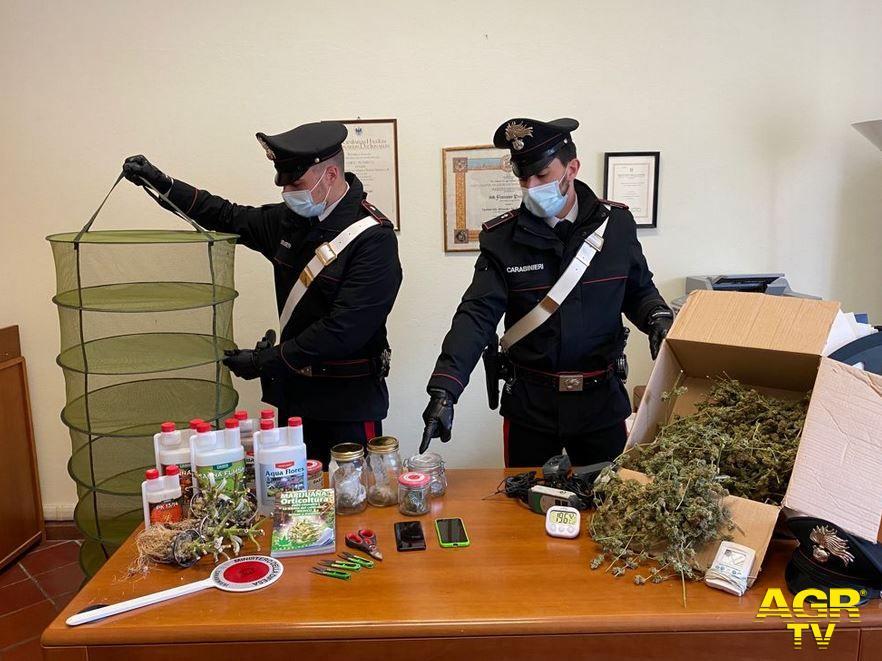 Carabinieri-Comando provinciale di Firenze Una serra per coltivare la marijuana: sequestrata a Bagno a Ripoli