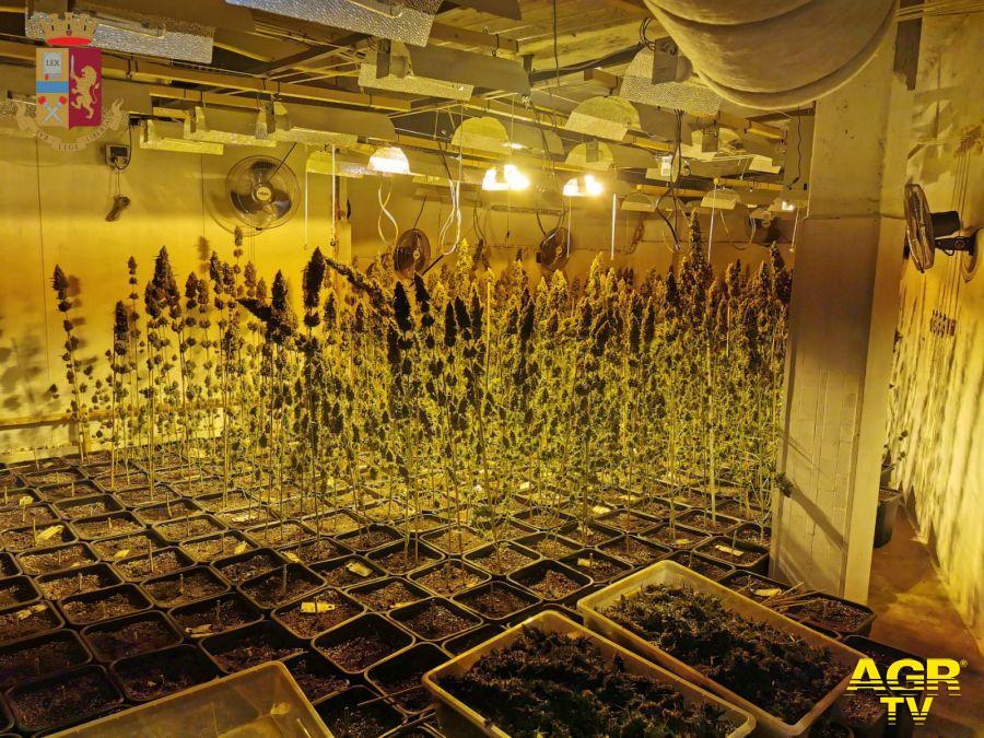 Roma, sotto l'hotel una coltivazione di marjuana, sequestrati 87 kg. di stupefacente