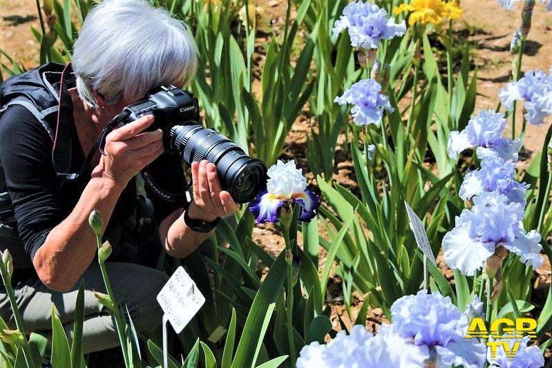 Comune di Firenze Riapre il Giardino dell'Iris, da domenica 2 maggio sarà possibile ammirare la fioritura primaverile